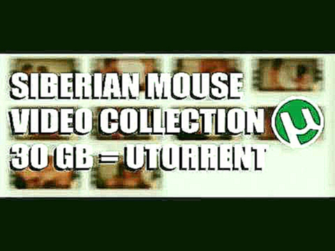 SIBERIAN MOUSE   VIDEO COLLECTION   маша Бабко