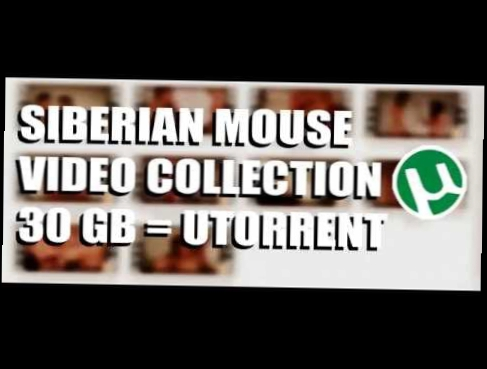 SIBERIAN MOUSE - VIDEO COLLECTION - маша Бабко